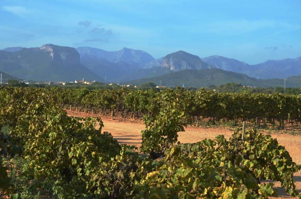 Wine tour to Mallorca