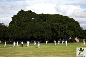 Cricket tour
